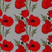 Nature Floral Poppy Pattern Vector Image. Red Petal Nature Plants Isolated On Blue Background. Botan poster