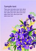 Floral vector background with irises