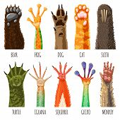 Animal Paw Vector Animalistic Pets Claw Or Hand Of Cat Or Dog And Pawed Bear Or Monkey Foot Illustra poster