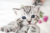 Surprised Kitten. Frightened Kitten Cute Kitten Lovely Kitten. Kitty poster