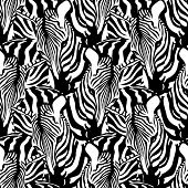 Zebra Seamless Pattern. Savannah Animal Ornament. Wild Animal Texture. Striped Black And White. Desi poster