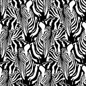 Zebra Seamless Pattern. Savannah Animal Ornament. Wild Animal Texture. Striped Black And White. Desi poster