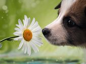 Dog Smelling The Flower. Funny Puppy Face poster
