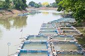 Fish cage farming in the river.