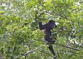 Young Monkey Eating
