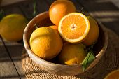 Oranges In Bowl.  Lots Of Fresh Oranges Fruits Plucked From Branch Of Orange Tree. poster