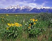 Spring In The Tetons 05