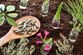 Jars With Plants Inside And Spoon With Capsules On Soil. Alternative Natural Medicine Concept. Eleva poster