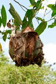 picture of cocoon tree  - An insect theme - JPG