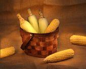 Corn Cobs In A Basket