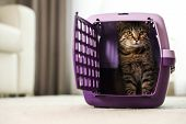 Cute Tabby Cat In Pet Carrier At Home poster