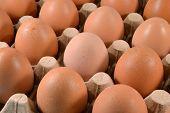 Egg carton with eggs.