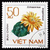 Postage Stamp Vietnam 1985 Echinocereus Knippelianus, Cactus