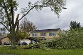 Downed Tree 6