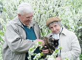 Happy Old Couple Against A Background Of Flowering Garden With Pussy-cat