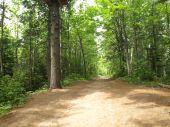 Naturaleza del bosque