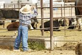 foto of bareback  - a future rodeo rider studies the competition - JPG