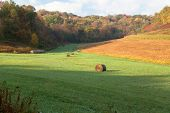 picture of hayfield  - Hayfield in Wisconsin in early morning in autumn - JPG