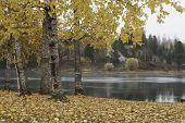 Autumn Scene By River.