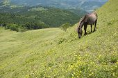 Horse and hillside