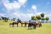 Several horses of seashore