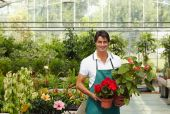 picture of flower shop  - portrait of male florist looking at camera and holding plants - JPG