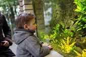 Постер, плакат: Kid Watching Fishes
