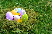 Colorful eggs and flowers on a background of grass
