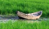 stock photo of marshlands  - Old traditional wooden boat of Bangladesh in a paddy field