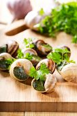stock photo of escargot  - escargots with parsley on a wooden table - JPG