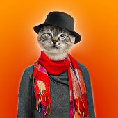 Cat wearing sweater, scarf and shirt, colored background