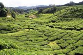 stock photo of cameron highland  - Road and tea plantation in Cameron Highlands in  Malaysia - JPG