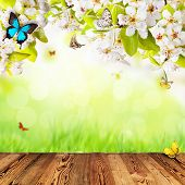 Spring apple blossoms above wooden planks. Blur green background with free space for text.