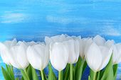 Beautiful bouquet of white tulips on blue background