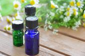essential oils with chamomile