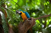 macaw parrot in jungles