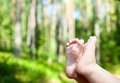 stock photo of legs air  - Little child gets his feet into the fresh air in a summer forest - JPG