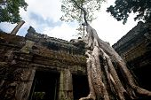 Old banyan tree growing in the ancient ruin of Ta Phrom, Angkor Wat, Cambodia.