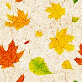 Seamless background with flying autumn leaves of a birch, maple and barberry