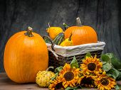Wicker basket full of summer squashes and pumpkins and bunch of sunflowers over dark gray background