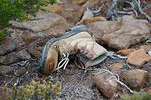 Torn hiking boot abandoned on the trail