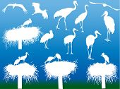 illustration with storks and on blue background