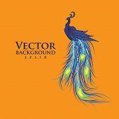 Vector peacock. Orange background. Fashionable design eps10.