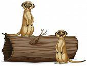 picture of meerkats  - Illustration of two meerkats on the log - JPG
