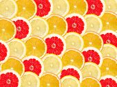 Abstract Background With Citrus-fruit Of Grapefruit, Orange And Lemon Slices. Close-up.