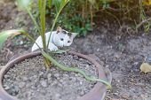 picture of garden snake  - White cat fight green snake in untidy dirty garden danger - JPG