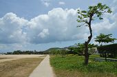 crooked tree on the background of Cumulus clouds in Asia