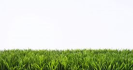 picture of grass  - Green grass lawn with sunny and rainy days - JPG