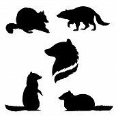 picture of animal silhouette  - Raccoon set of black silhouettes - JPG