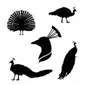 stock photo of animal silhouette  - Peacock set of black silhouettes - JPG